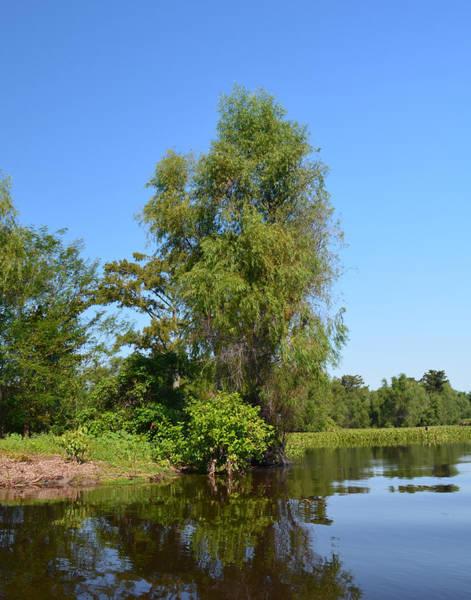 Photograph - Atchafalaya Basin 39 by Maggy Marsh