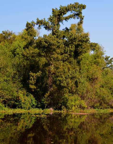 Photograph - Atchafalaya Basin 4 by Maggy Marsh