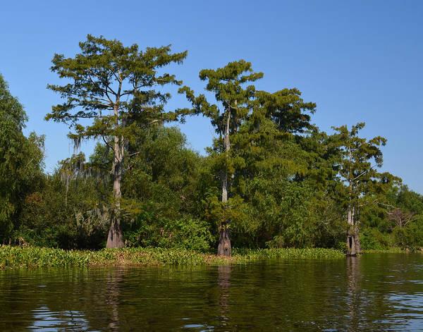 Photograph - Atchafalaya Basin 41 by Maggy Marsh