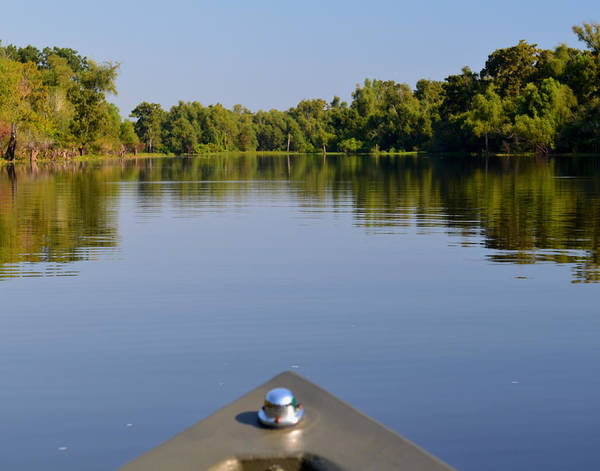 Photograph - Atchafalaya Basin 5 by Maggy Marsh