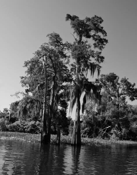 Photograph - Atchafalaya Basin 50 by Maggy Marsh