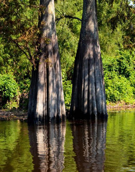 Photograph - Atchafalaya Basin 53 by Maggy Marsh