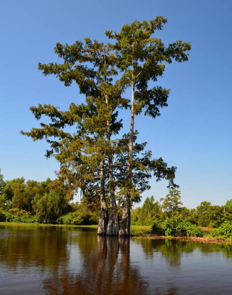 Photograph - Atchafalaya Basin 56 by Maggy Marsh