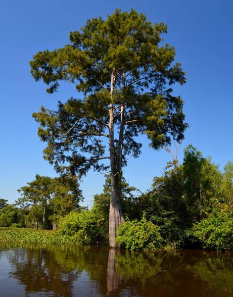 Photograph - Atchafalaya Basin 61 by Maggy Marsh