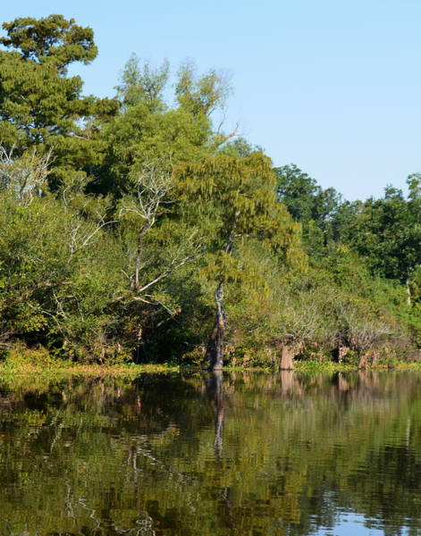 Photograph - Atchafalaya Basin 7 by Maggy Marsh