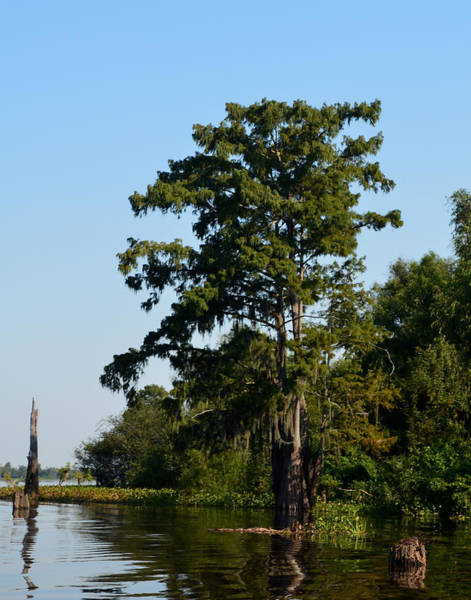 Photograph - Atchafalaya Basin 9 by Maggy Marsh