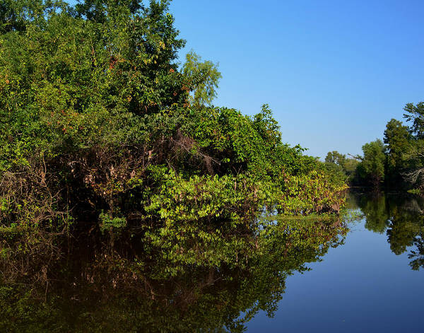 Photograph - Atchafalya Basin by Maggy Marsh