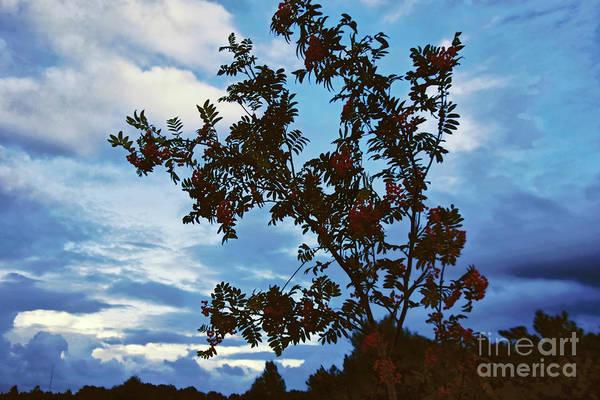 Rowan Photograph - August Evening by Wedigo Ferchland
