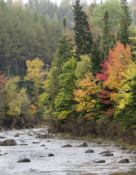 Wall Art - Photograph - Ausable River Near Lake Placid - New York by Brendan Reals