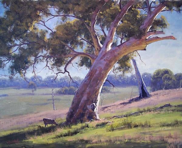 Gercken Painting - Australian Eucalyptus Tree by Graham Gercken