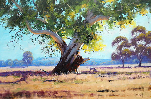 Old Tree Painting - Australian Red Gum by Graham Gercken