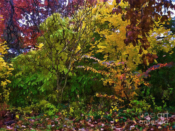 Photograph - Autumn 9 by Jeff Breiman