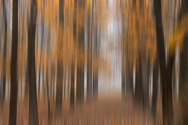 Photograph - Autumn Abstract by Darlene Bushue