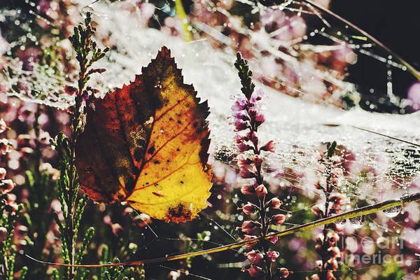 Wall Art - Photograph - Autumn Ahead by Wedigo Ferchland