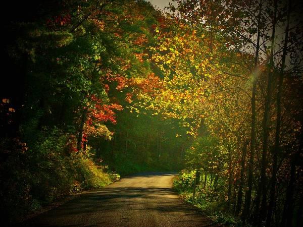 Wall Art - Photograph - Autumn Arch by Joyce Kimble Smith