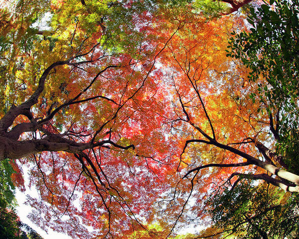 Fish Eye Lens Photograph - Autumn Color by Shuya Seno Photography