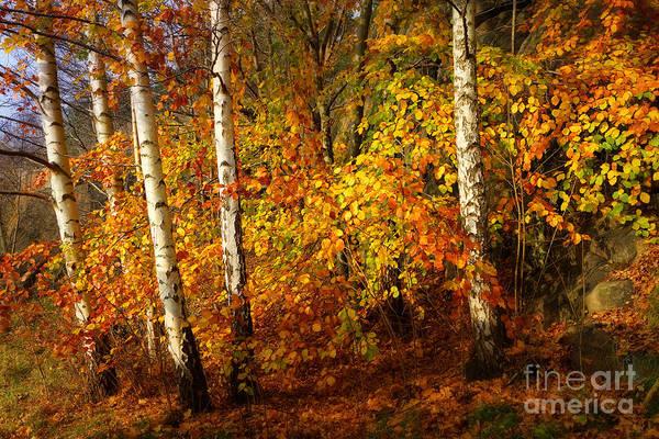 Photograph - Autumn Colorplay by Lutz Baar