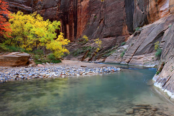 Photograph - Autumn Colors In The Virgin Narrows In Zion by Pierre Leclerc Photography