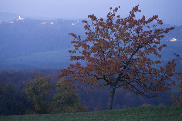 Jance Photograph - Autumn Colour At Dusk by Ian Middleton