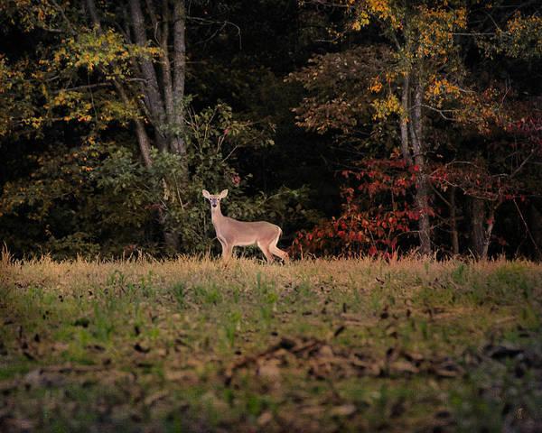 Photograph - Autumn Deer 2 by Jai Johnson