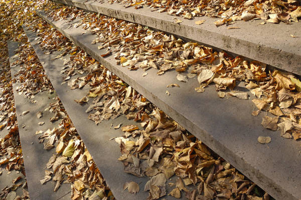 Photograph - Autumn - Foliage On Stairs by Matthias Hauser