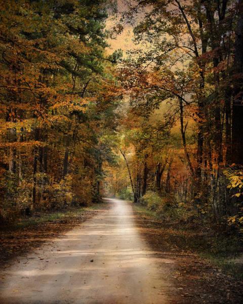 Photograph - Autumn Forest 3 by Jai Johnson