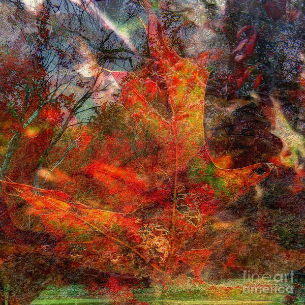 Photograph - Autumn Fusion 2 by Jeff Breiman