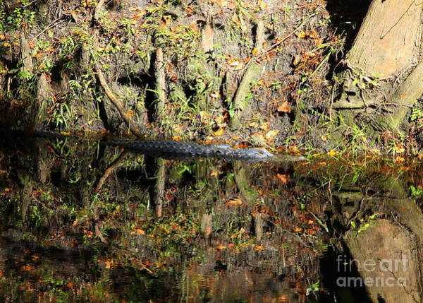 Photograph - Autumn Gator by Carol Groenen