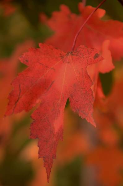 Wall Art - Photograph - Autumn Glory by Maria Suhr