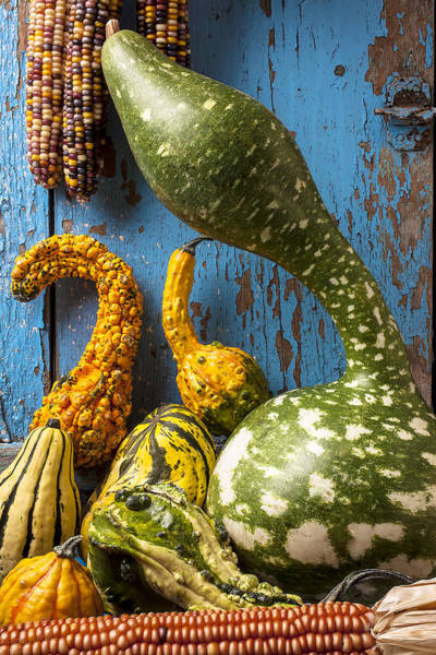 Gourd Photograph - Autumn Gourds by Garry Gay