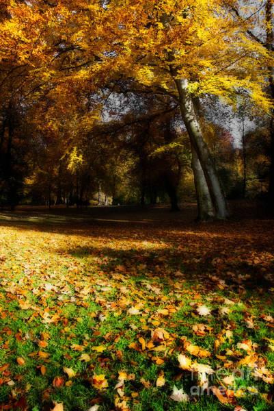Photograph - Autumn by Hannes Cmarits