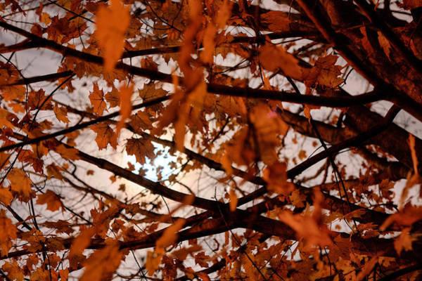 Photograph - Autumn Haunts by JC Findley