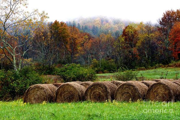 Tioga Photograph - Autumn Hay Bales by Thomas R Fletcher