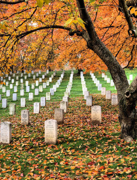 Photograph - Autumn Heroes by JC Findley