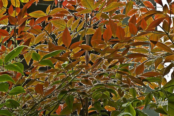 Autumn In Muttart Art Print