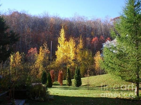 Bernadette Photograph - Autumn In My Front Yard by Bernadette Charles