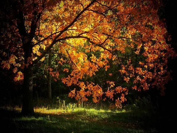 Wall Art - Photograph - Autumn In Orange by Joyce Kimble Smith
