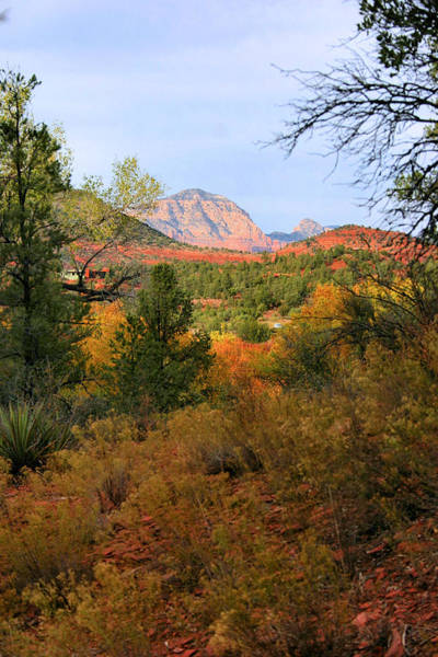 Photograph - Autumn In Red Rock Canyon by Kristin Elmquist