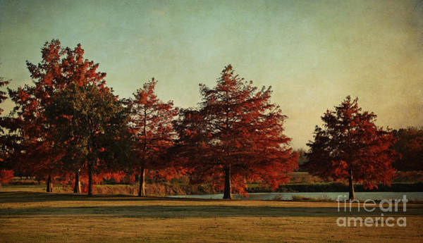 Bald Cypress Photograph - Autumn In The Park by Lisa Porier