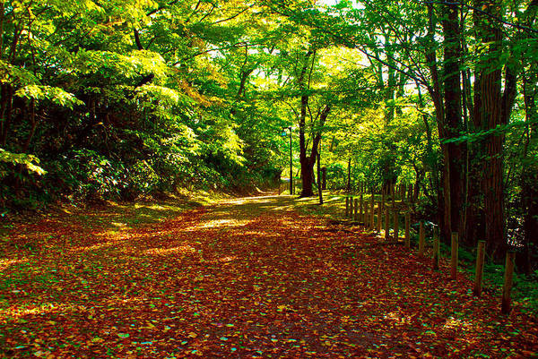 Photograph - Autumn In The Park by Tim Ernst
