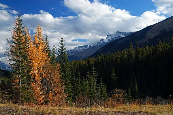 Wall Art - Photograph - Autumn In The Rockies by Larry Ricker