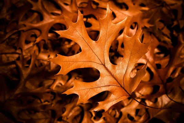 Photograph - Autumn by Jason Smith