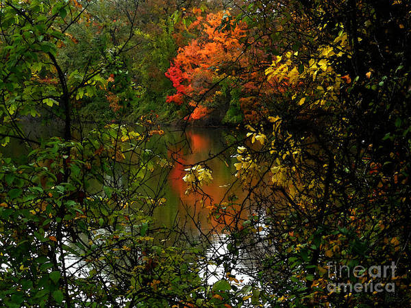 Photograph - Autumn Lakeview by Jeff Breiman