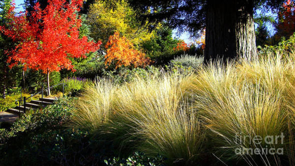 Photograph - Autumn Landscape 1 by Xueling Zou