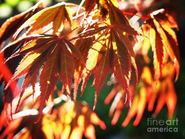 Photograph - Autumn Landscape 2 by Xueling Zou