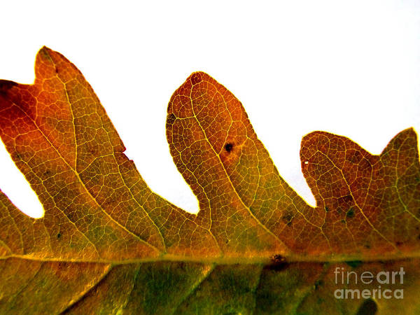 Photograph - Autumn Leaf Macro Photograph by Kristen Fox