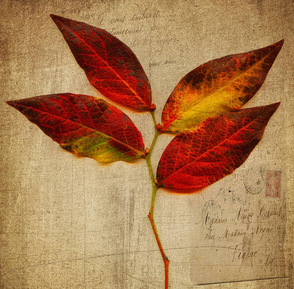 Autumn Leaf With Texture Art Print