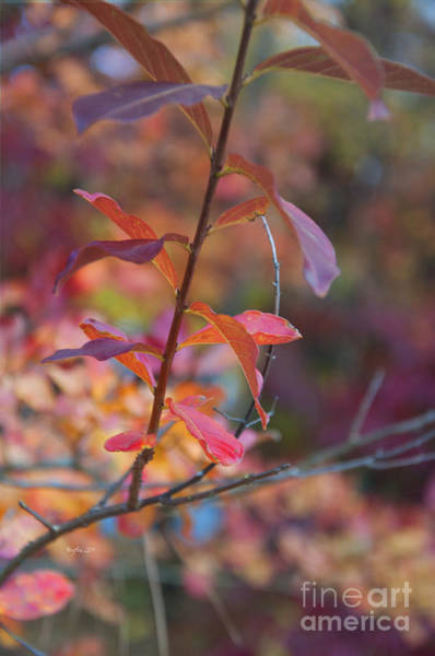 Wall Art - Photograph - Autumn Leaves - Candy by Affini Woodley