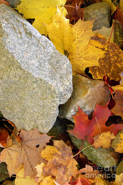 Wall Art - Photograph - Autumn Leaves And Rocks by Mike Nellums