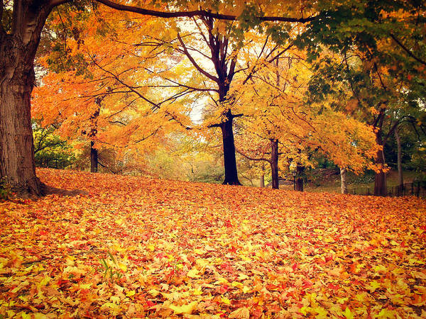Wall Art - Photograph - Autumn Leaves - Central Park - New York City by Vivienne Gucwa